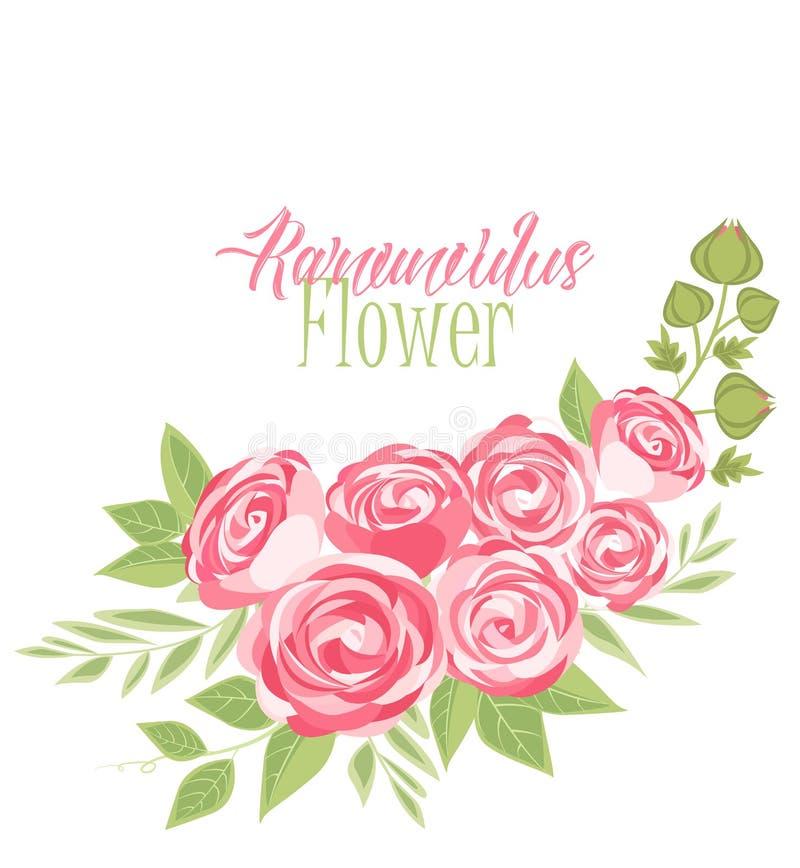 Vector ranunculus flower vector illustration