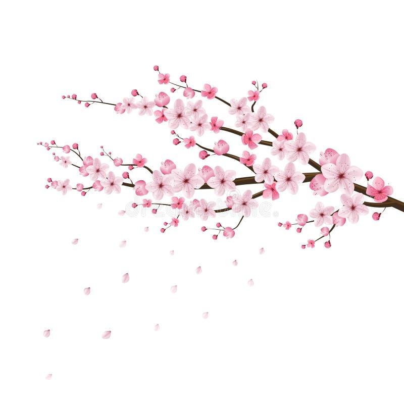 Vector realista de la flor de cerezo, Sakura, Japón stock de ilustración
