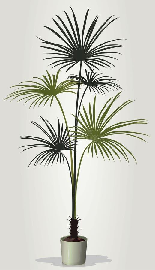 Vector realista del houseplant en el pote blanco ilustración del vector