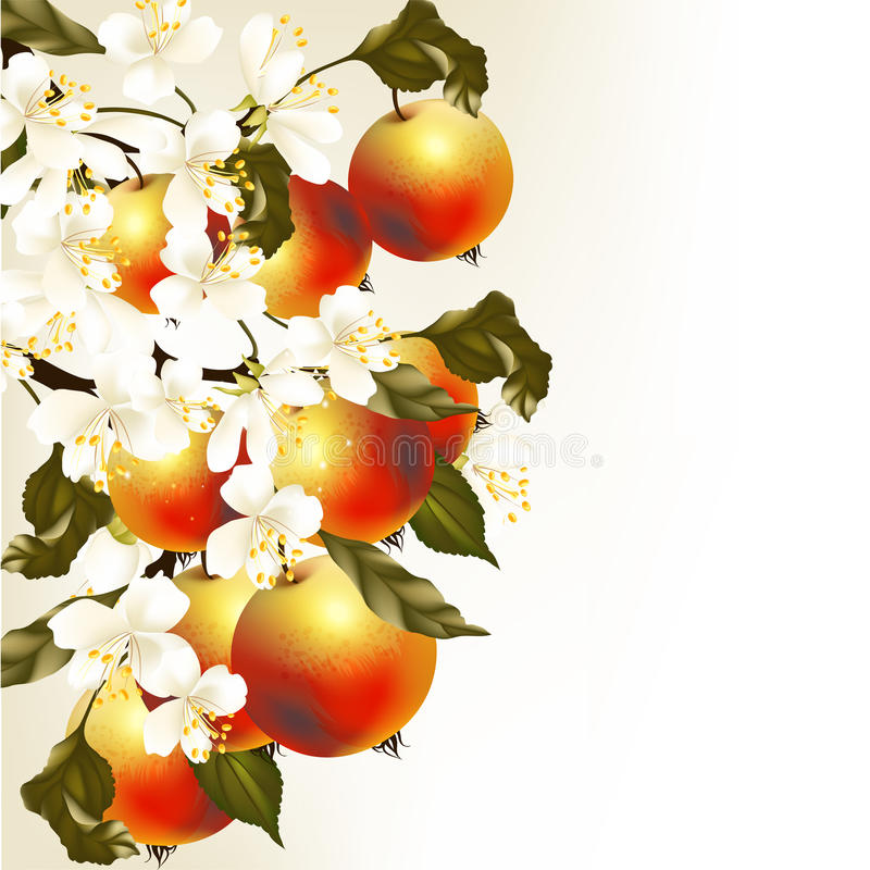 Cute artistic background with realistic fresh apples on branch w stock illustration