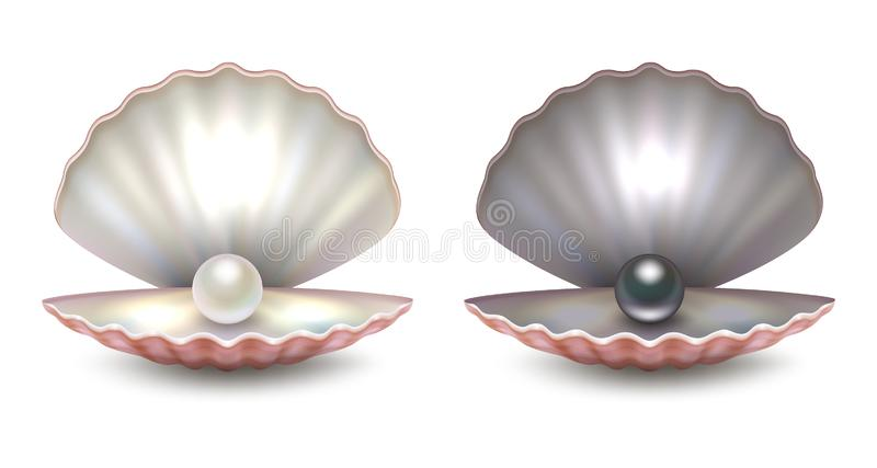 Vector realistic 3d beautiful natural opened pearl shell with pearls inside - white and black color - icon set close-up. Isolated on white background. Design vector illustration