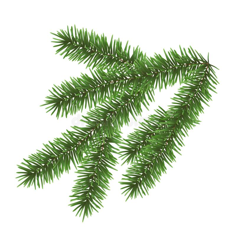 Vector realistic green coniferous branch isolated on white background - christmas decoration stock illustration