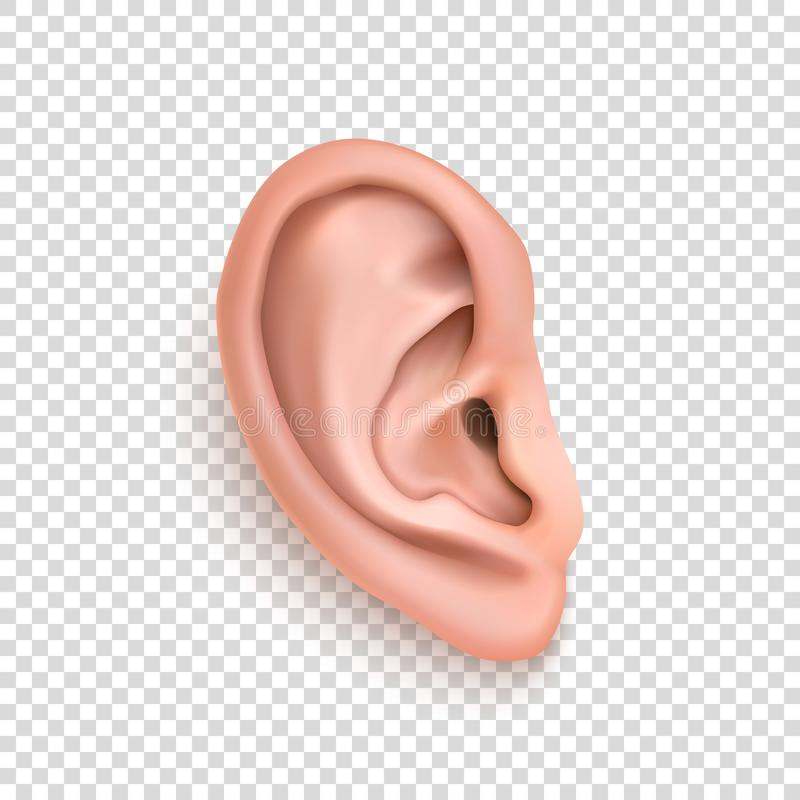 Free Vector Realistic Human Ear Icon Closeup Isolated On Transparency Grid Background. Royalty Free Stock Photos - 104949978