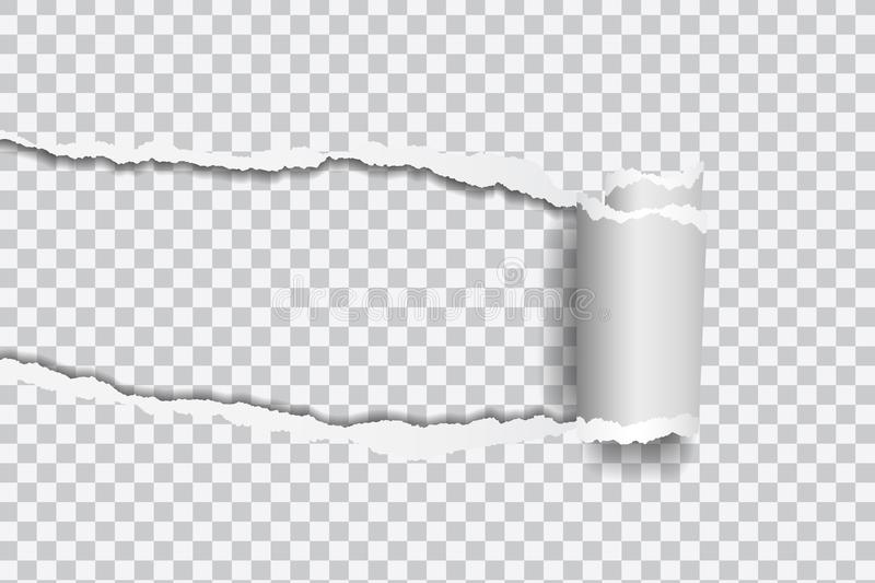 Vector realistic illustration of torn paper with rolled edge on royalty free illustration