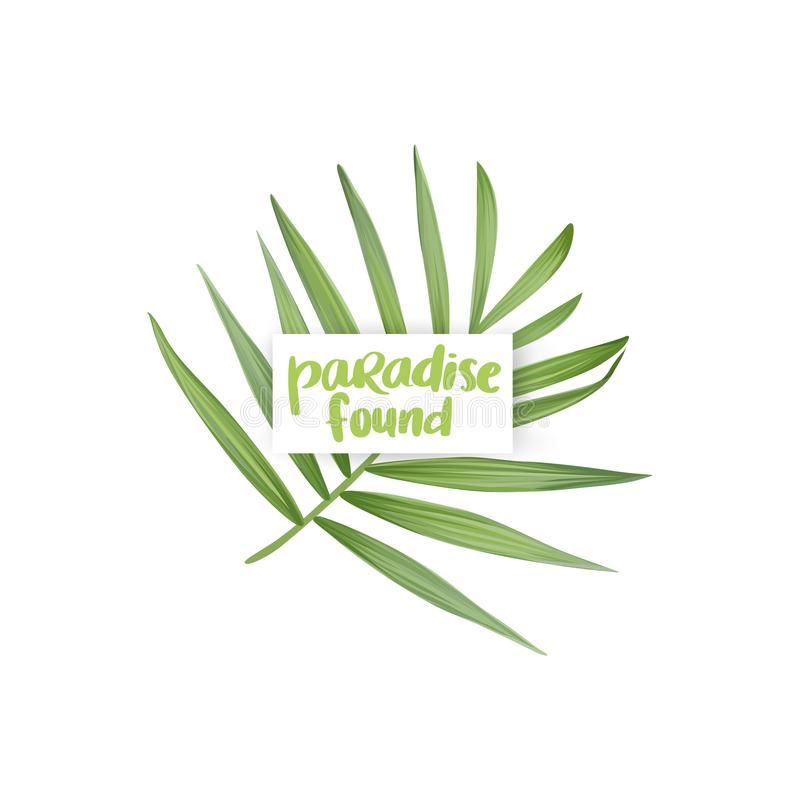 Vector realistic palm leaf isolated on a white background. Tropical leaves. stock illustration