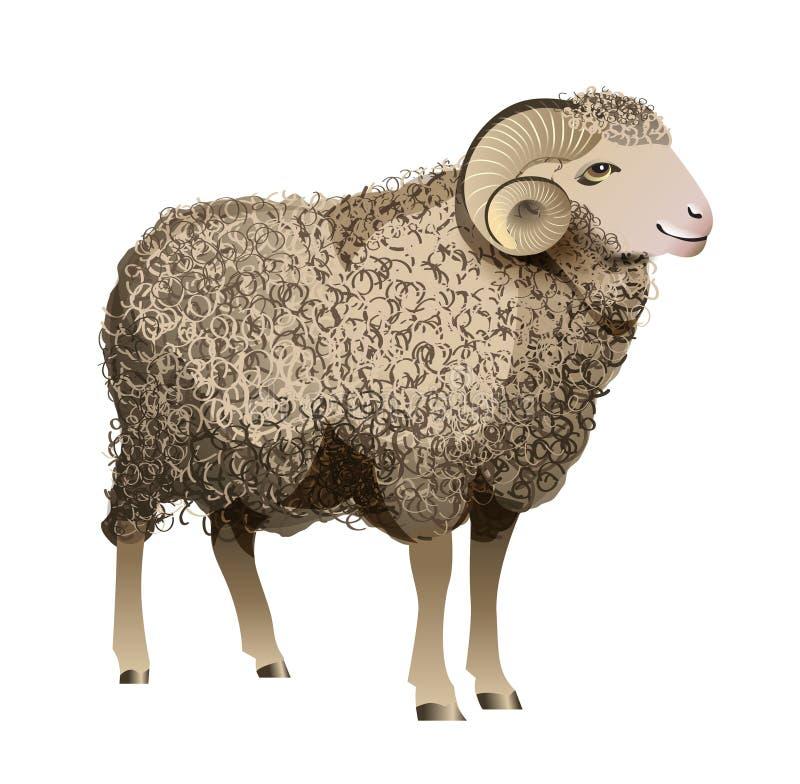 Vector Realistic Sheep vector illustration