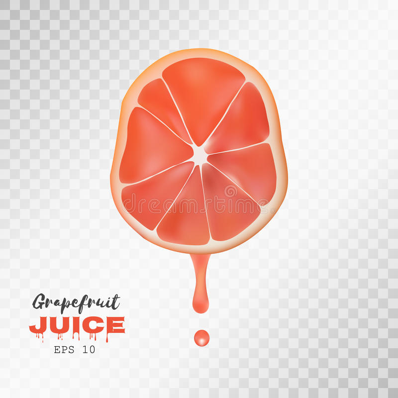 Vector realistic sliced grapefruit with drop of juice. Transparent background. Vector realistic sliced grapefruit with drop of juice. Juicy fruit presentations royalty free illustration