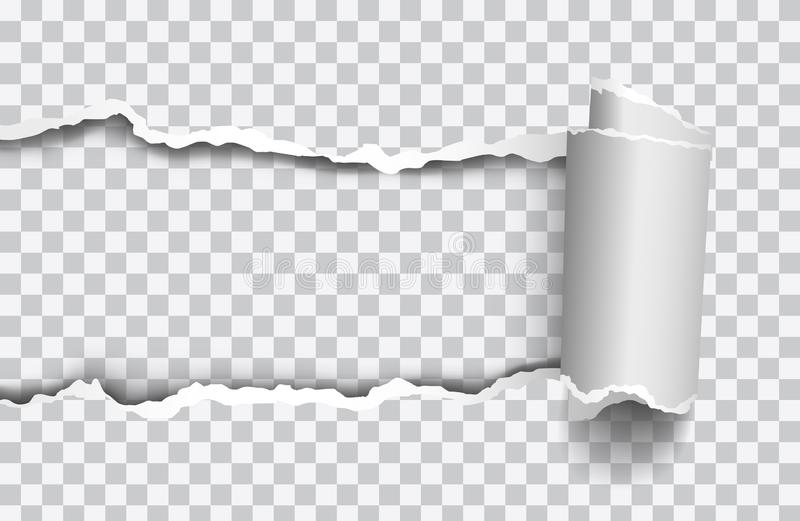 Vector realistic torn paper with rollled edge on transparent background stock illustration