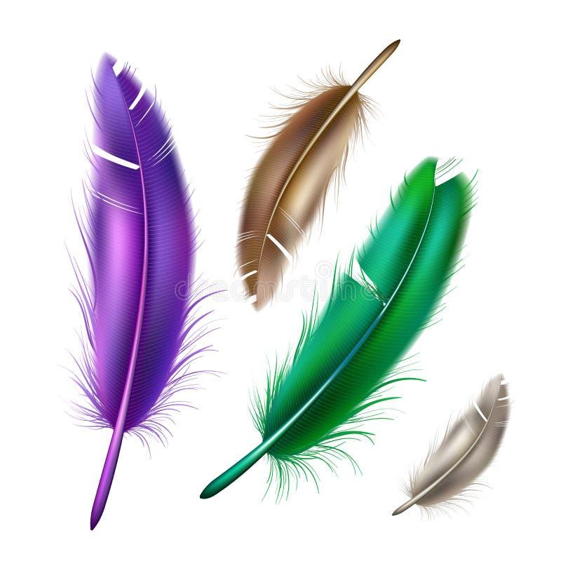 Vector realistische de veerreeks van de pauw peafowl kleur royalty-vrije illustratie