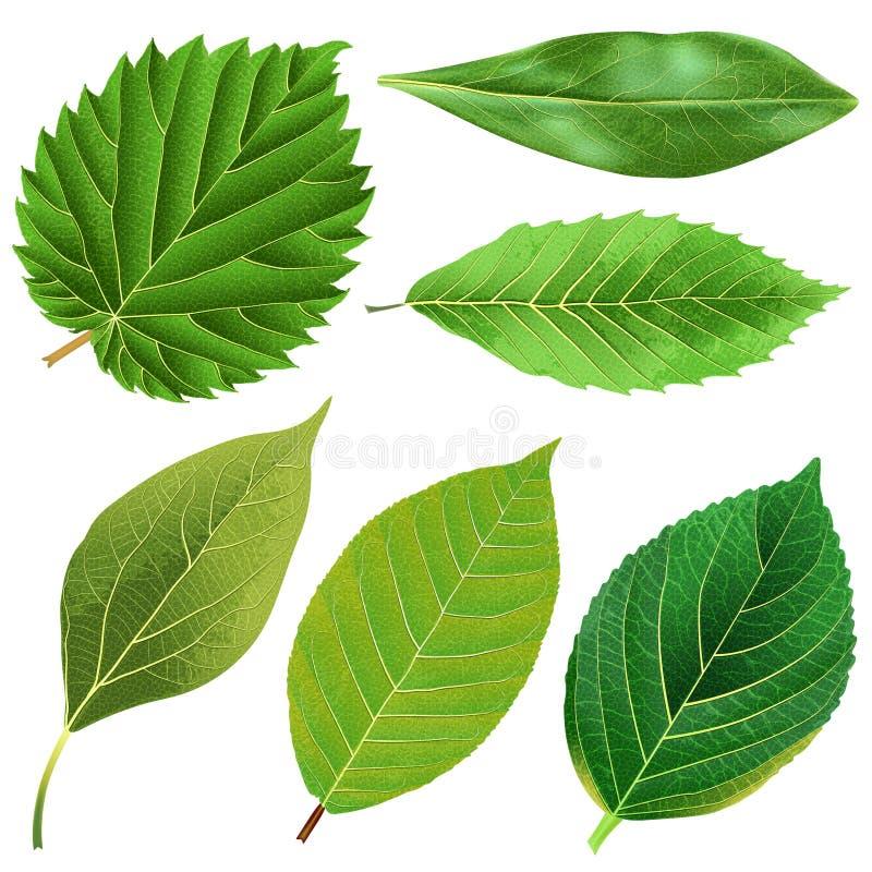 Vector realistische groene bladereninzameling vector illustratie