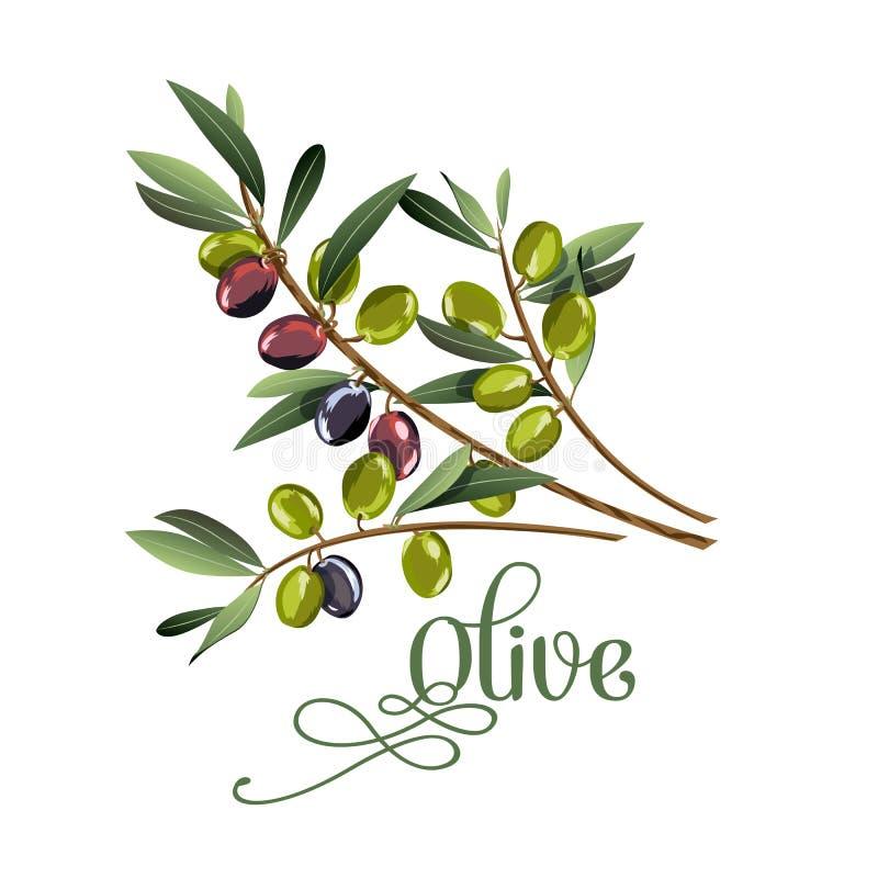 Vector realistische Illustration der Niederlassung der schwarzen und grünen Oliven, die auf weißem Hintergrund lokalisiert wird vektor abbildung