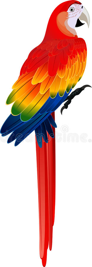 Vector red Macaw ara parrot stock illustration