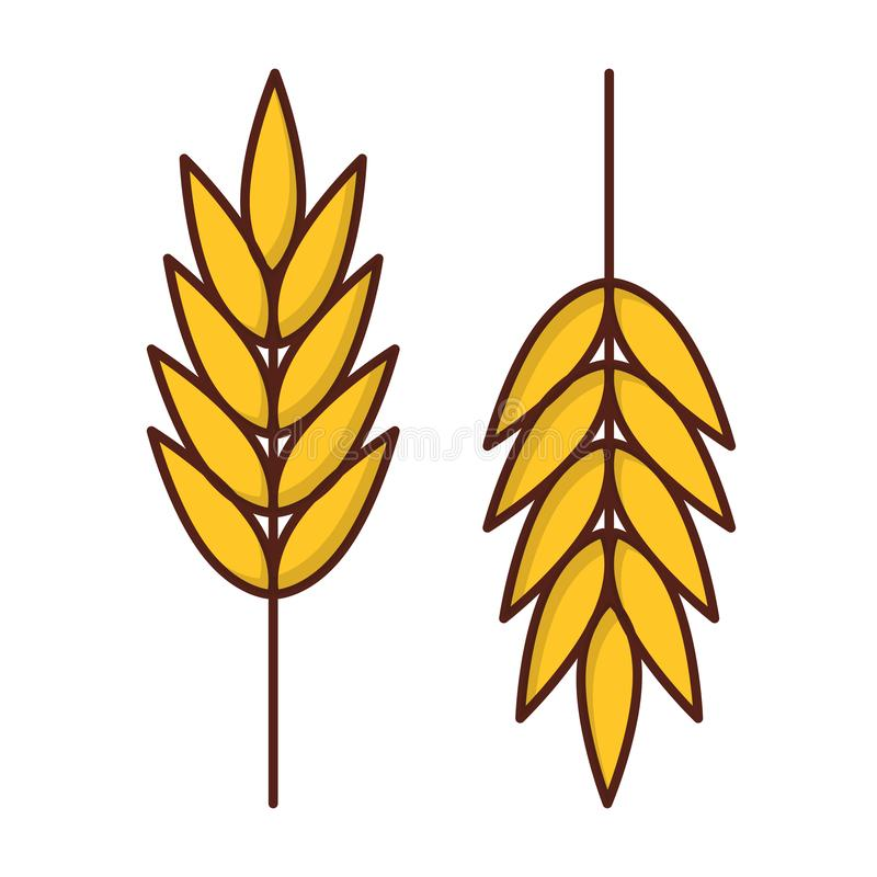 Vector ripe ears of wheat isolated on white background. Vector illustration with ripe ears of wheat isolated on white background. Harvesting icon in flat cartoon vector illustration