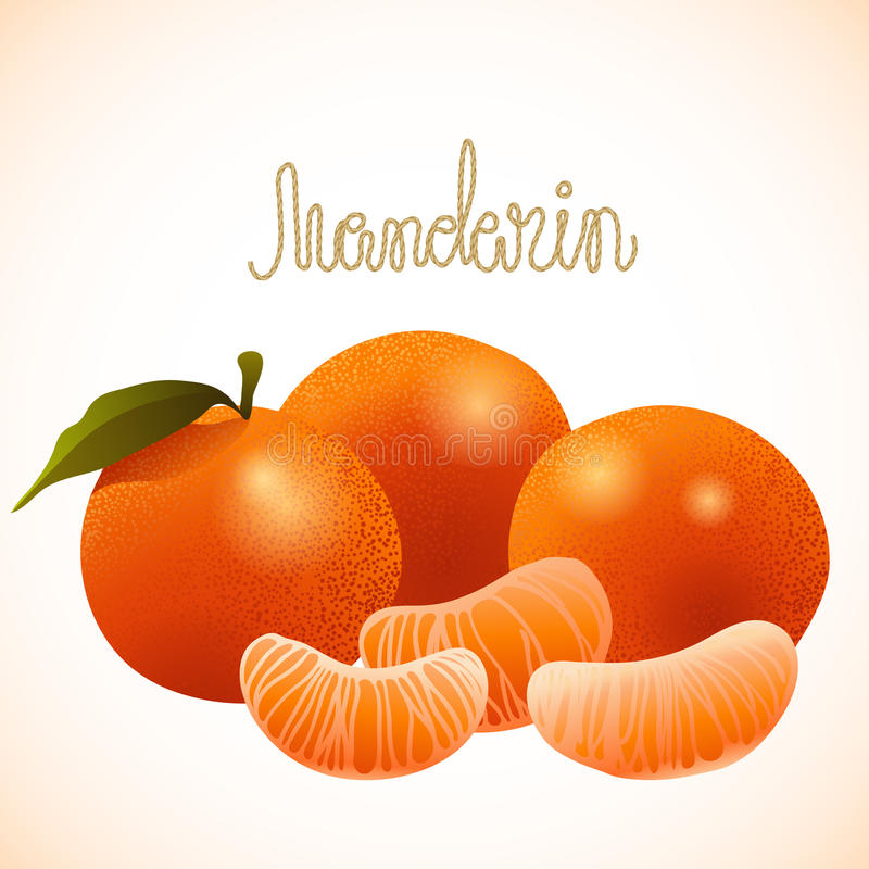 Vector ripe mandarin. Vector mandarin. Every fruit from each other stock illustration