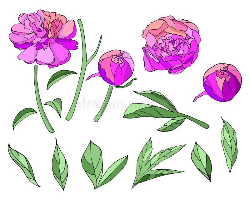 Vector rosado del sistema de elementos de la peonía de la flor stock de ilustración