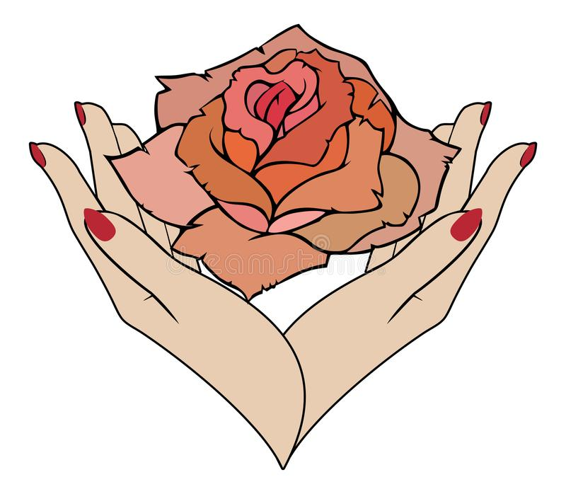 Vector rose in female hands vector illustration
