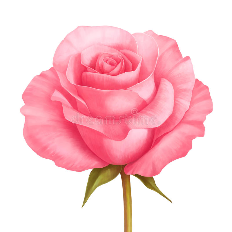 Vector rose pink flower illustration isolated on white vector illustration