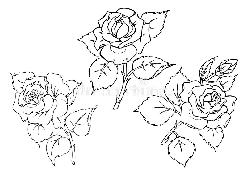 Download Vector Roses. Trace Of Freehand Drawing. Stock Vector - Illustration of pencil, flower: 7756170
