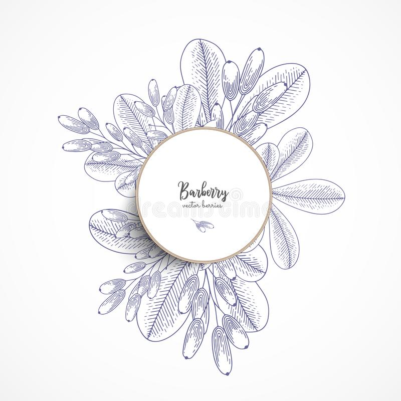 Vector round banner with barberry. Vintage banner with hand drawn berries. With place for text. Great for label, packaging design, stock illustration