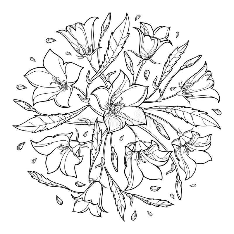 Vector round bouquet with outline Campanula or Bellflower or Bluebell flower, leaf and bud in black isolated on white background. Ornate plant in contour style stock illustration