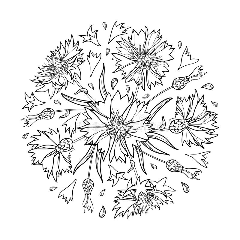 Vector round bouquet with outline Cornflower, Knapweed or Centaurea flower, bud and leaf in black isolated on white background. royalty free illustration
