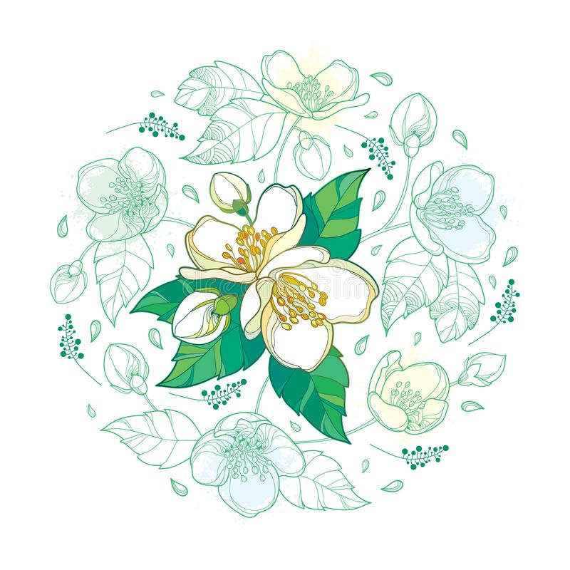 Vector round bouquet with outline Jasmine flower bunch, bud and ornate leaves in pastel green and white isolated on white. vector illustration