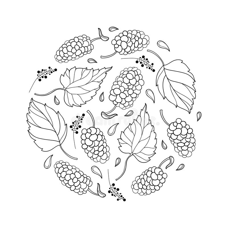 Vector round composition with outline Mulberry or Morus with ripe berry and leaf in black isolated on white background. royalty free illustration