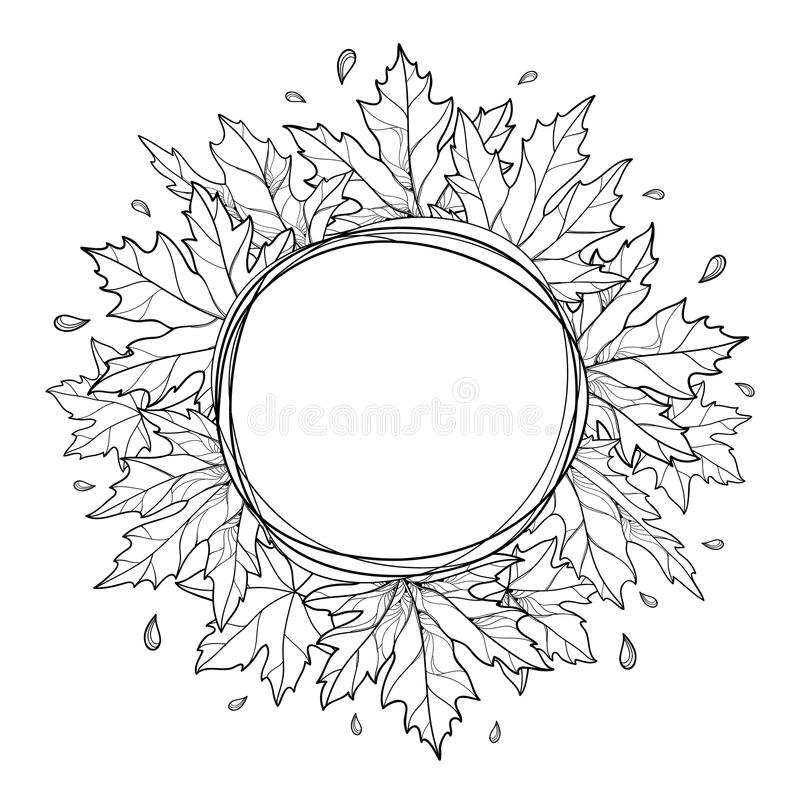 Vector round frame of bunch with outline Acer or Maple ornate leaf in black isolated on white background. royalty free illustration
