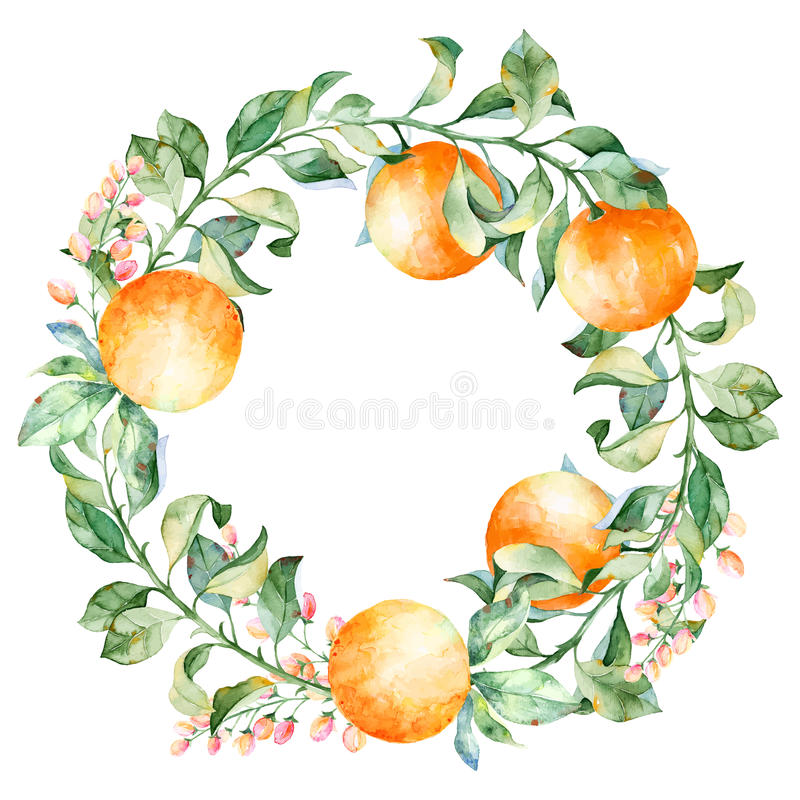 Vector round frame of watercolor orange and flowers. Watercolor illustration wreath of mandarin and leaves. Can be used as a greeting card for background stock illustration