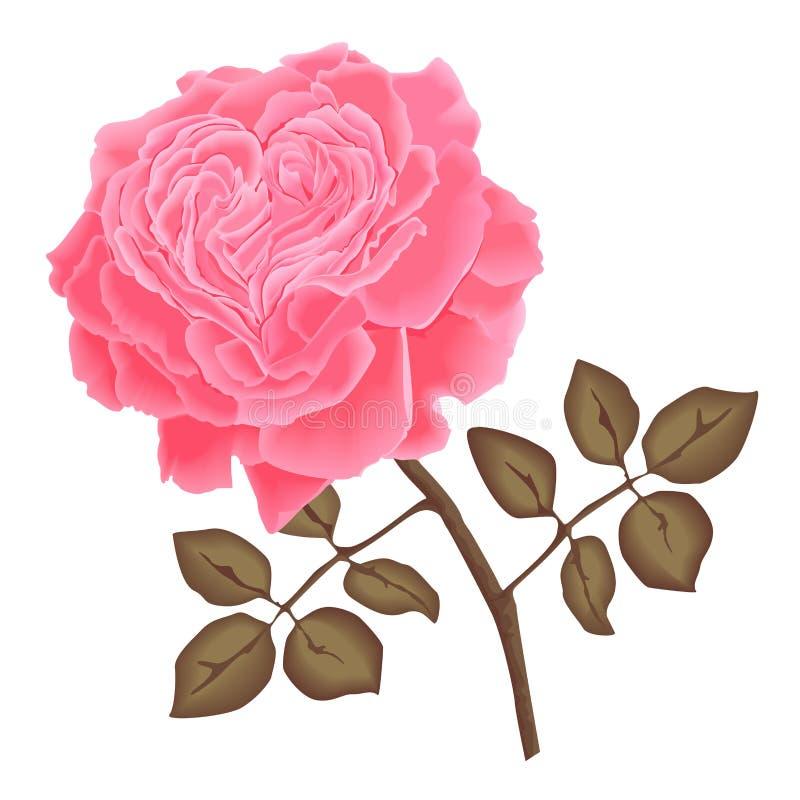 Vector roze nam toe royalty-vrije stock fotografie