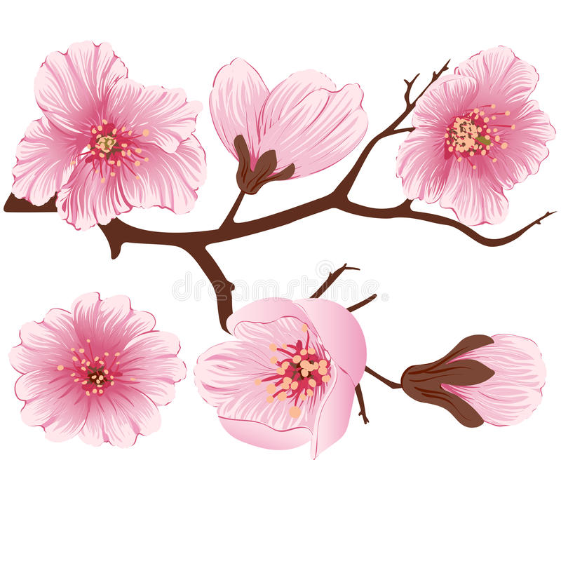 Vector sakura flower branch element. Elegant element for your design. Cherry blossom vector illustration