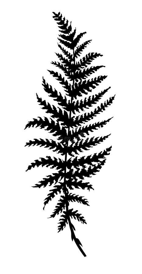 Vector Schattenbildblattfarn lizenzfreie abbildung