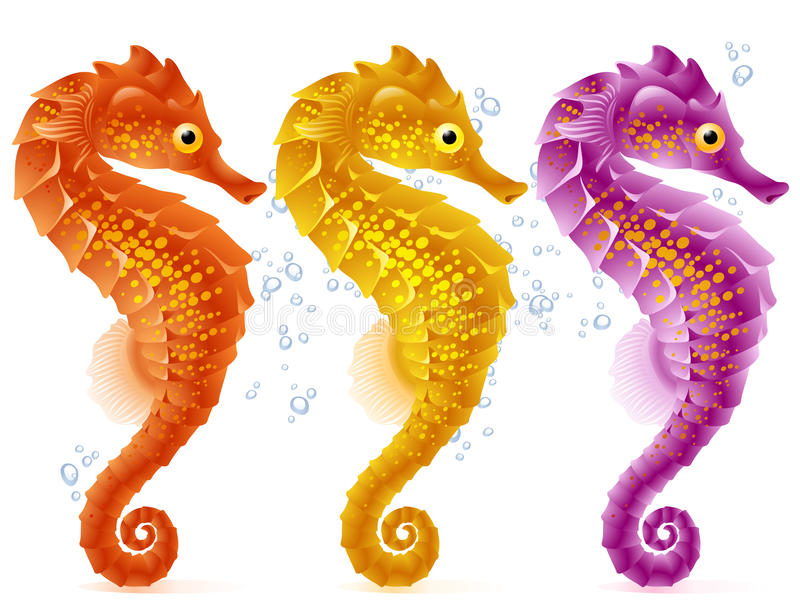 Vector sea horse stock illustration