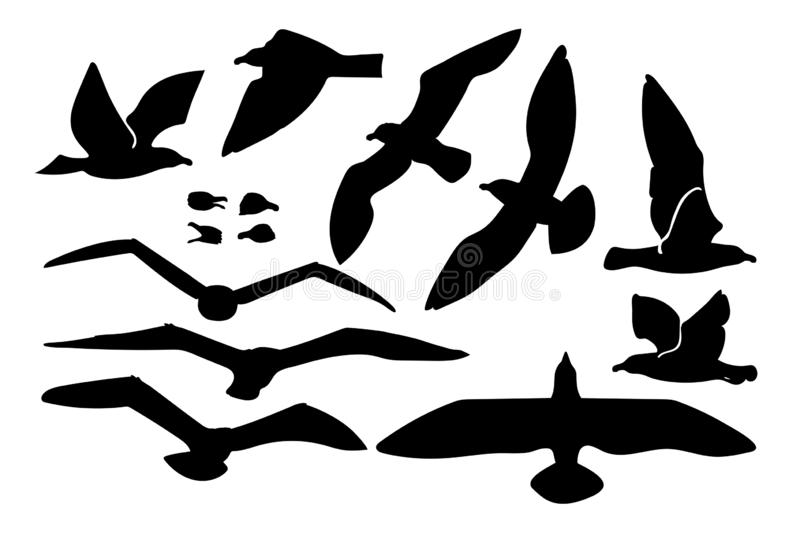 Vector seagull sea gull set. Vector cartoon seagull sea gull cliparts set. Graphic objects collection stock illustration