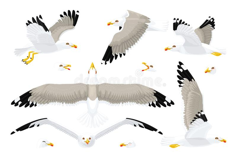 Vector seagull sea gull set. Vector cartoon seagull sea gull cliparts set. Graphic objects collection vector illustration