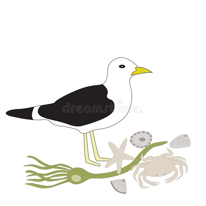 Vector Seagull, Seaweed, Sea Shells, Star Fish, Crab Illustration stock illustration