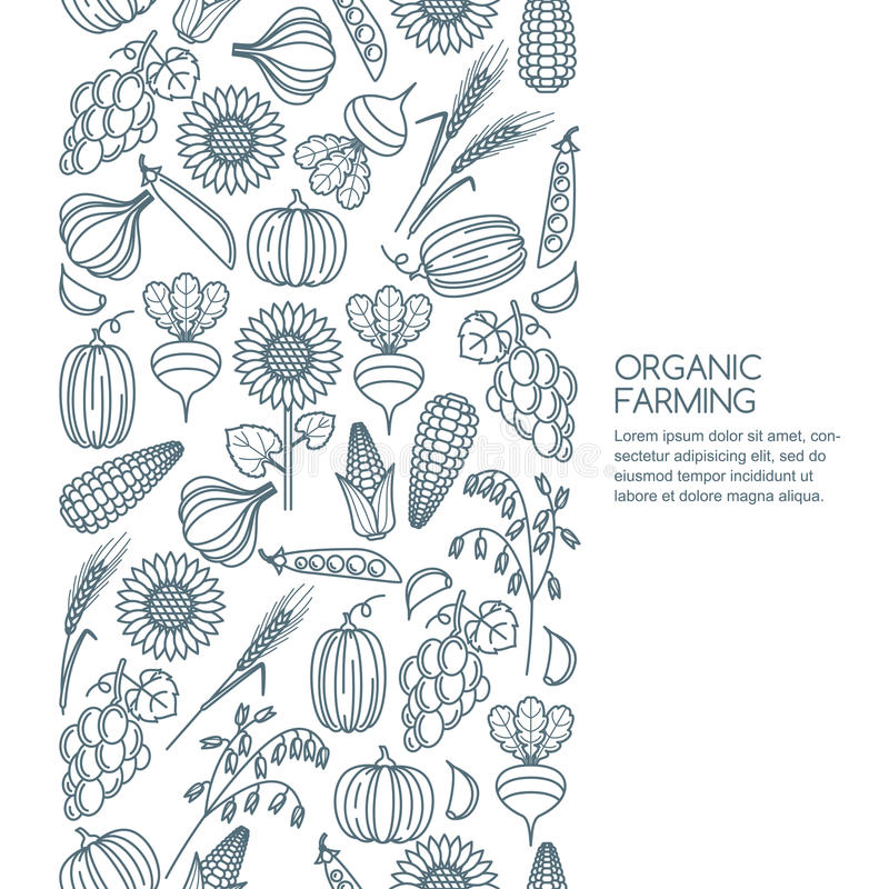 Vector seamless background with outline vegetables and cereal grains icons. Autumn harvest line illustration. Design elements for agriculture, harvesting vector illustration