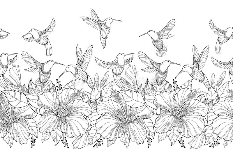 Vector seamless border with Hibiscus flower and flying Hummingbird or Colibri in contour style on the white background. vector illustration