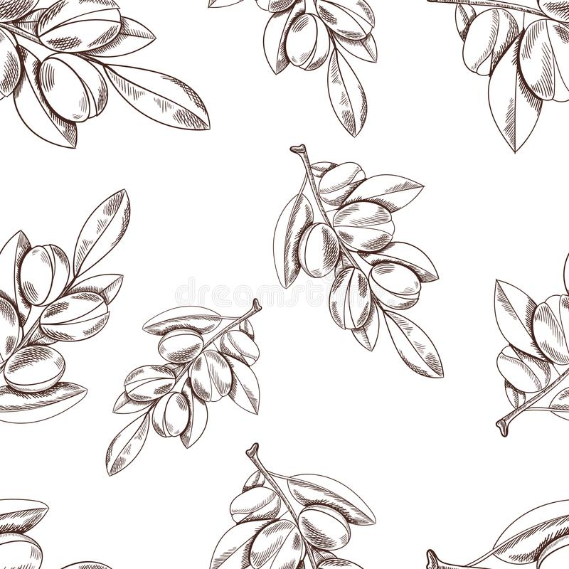Vector Seamless Pattern: Argan Branch, Hand Drawn Outline Illustrations. Vector Seamless Pattern: Argan Branch, Hand Drawn Outline Illustrations on White royalty free illustration