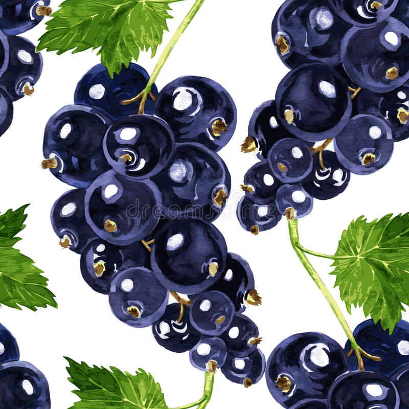 Vector seamless pattern with blackcurrant stock illustration