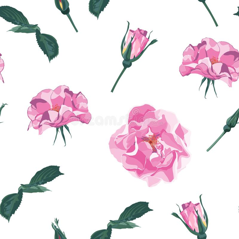 Vector seamless pattern with briar. Wild light violet roses, rosa canina dog rose garden flowers. stock illustration