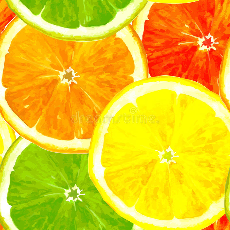 Vector seamless pattern with citrus fruits. Vector seamless pattern with slice of citrus fruits drawing by watercolor, lime,lemon,orange and grapefruit, hand vector illustration