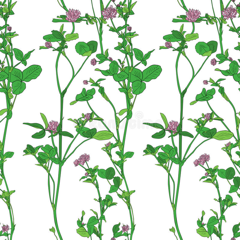 Vector seamless pattern with drawing clovers vector illustration