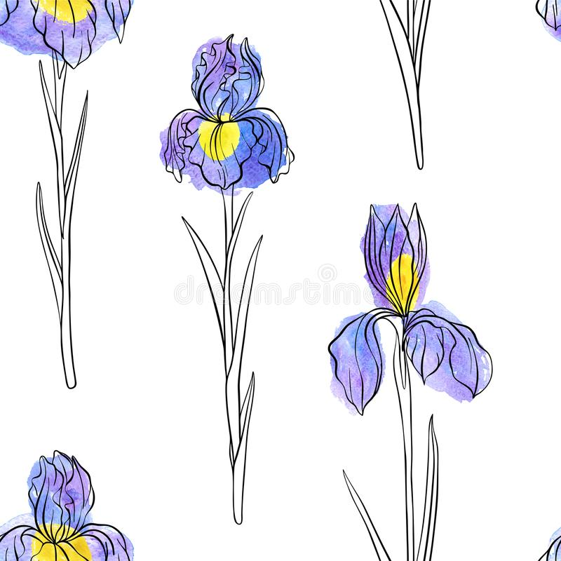 Vector seamless pattern with flowers of iris royalty free illustration
