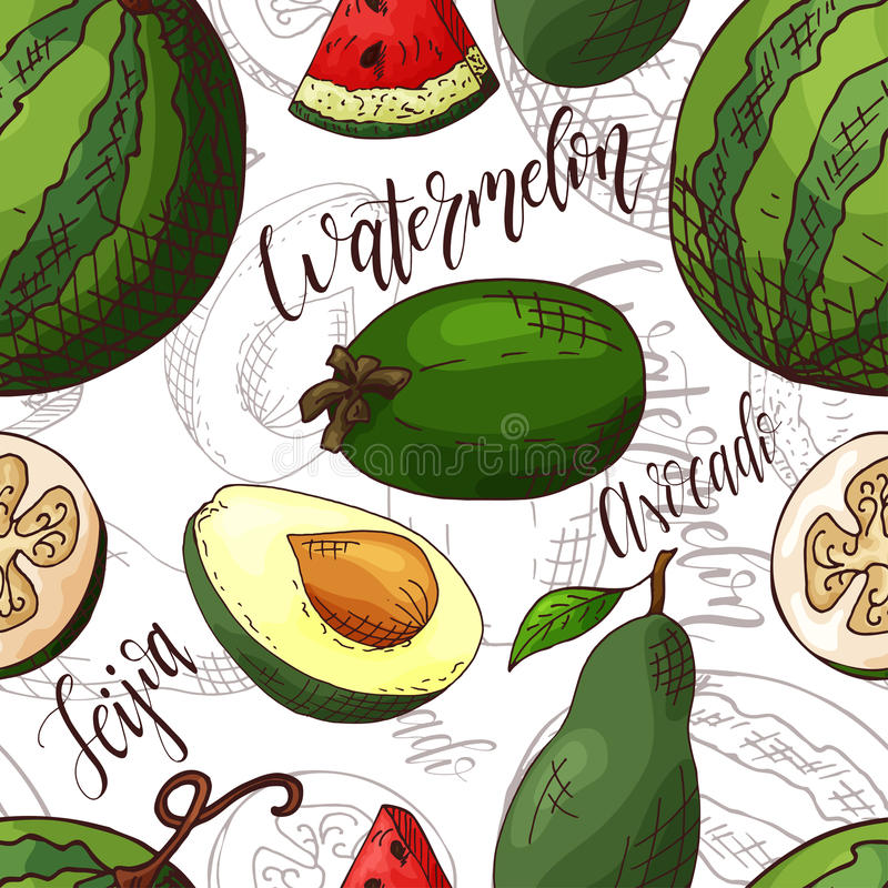 Vector seamless pattern with fruits. Watermelon and avocado and feijoa background. Hand drawn elements. stock illustration