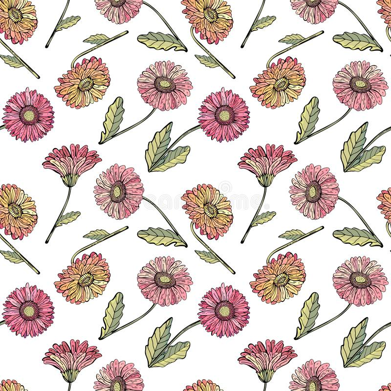 Vector seamless pattern gerbera Daisy. Background of bright, pink, orange, red flowers, realistic hand drawing. Botanical royalty free illustration