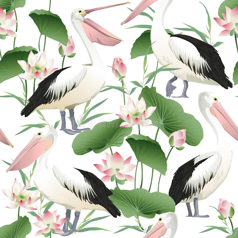 Vector seamless pattern with graceful pelicans. stock illustration