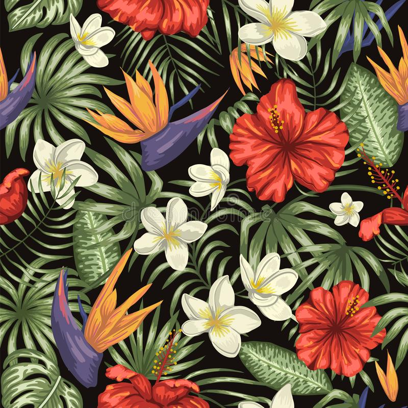Vector seamless pattern of green tropical leaves with plumeria, strelitzia and hibiscus flowers on black background royalty free illustration