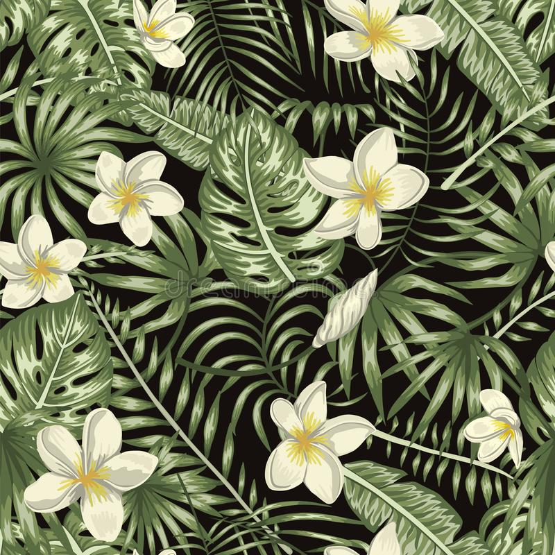Vector seamless pattern of green tropical leaves with white plumeria flowers on black background royalty free illustration