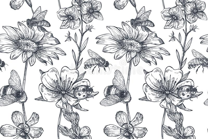 Vector seamless pattern with hand drawn chamomile, wildflowers, herbs, bee stock illustration